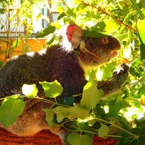 Lone Pine Koala Sanctuary,Brisbane